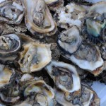Cone Bay Blacklipped Oysters