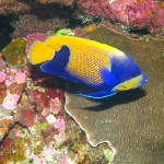Rowley Shoals colourful fish